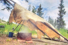A photo of a large moose hide being pre-smoked