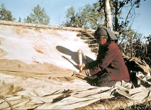 A photo of a Cree woman tanning moose hide